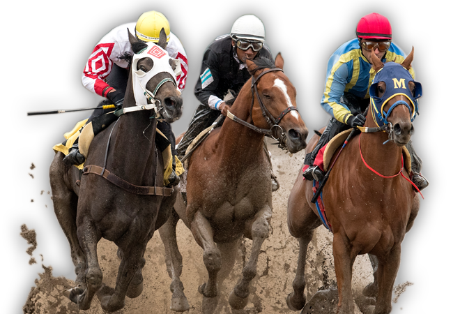 Image result for horse race images