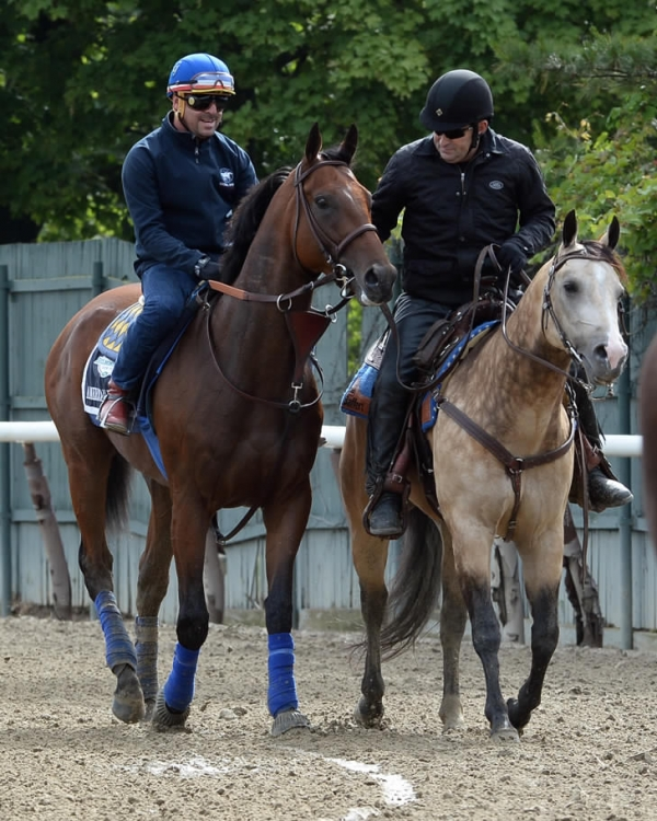 American Pharoh and pony Smokey head back to the barns after a jog around Belmont track earlier in the week