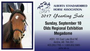 2017 ASHA Yearling Sale