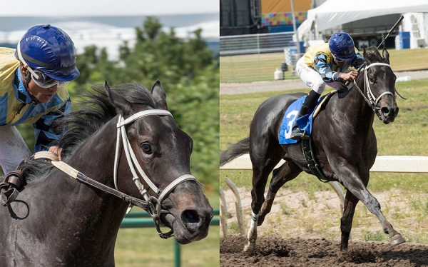 Norm's Big Bucks in the stretch of the 27th running of the 2-Year-Old Sales Stake at Northlands Park, Keishan Balgobin, jockey/Tim Rycroft, trainer