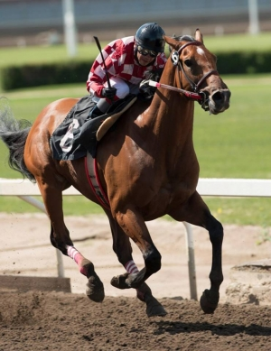 Commander with Jorge Espita up in the 50th Spangled Jimmy on June 29 at Northlands Park