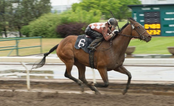 Shannon Beauregard riding and winning for the Ron Grieves/Barn None Ranches connection in late May at the Park
