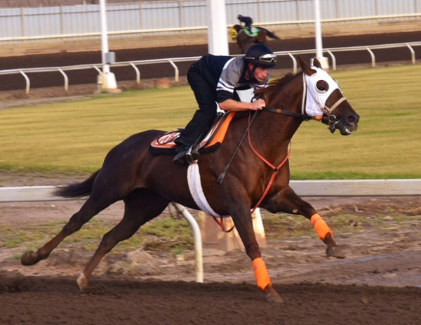 Brandon Duchaine galloping at Northlands Park