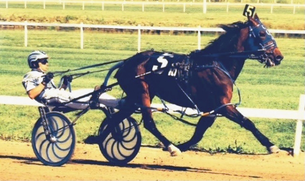 "Let's Meet Alberta Open Pacing Star ""Who Doesnt"""