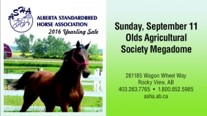 2016 ASHA Yearling Sale