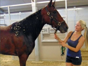Marissa Kleinsasser in the Cal Expo barns with one of her pupils