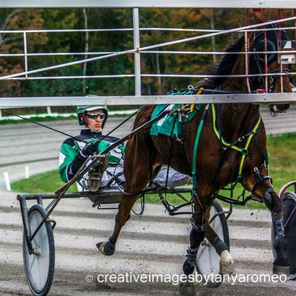Harness racing has always boiled in Dave Kelly's blood