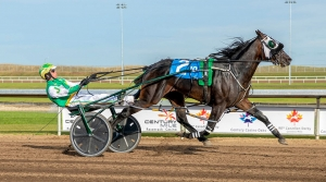 Kneedeep N Custard in the Western Canada Pacing Derby at Century Mile on the weekend