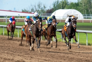 Gem Alta in the Fred Jones Stake this weekend at Century Mile