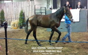 Green Rider brought in the top bid at this year's ASHA Yearling Sale