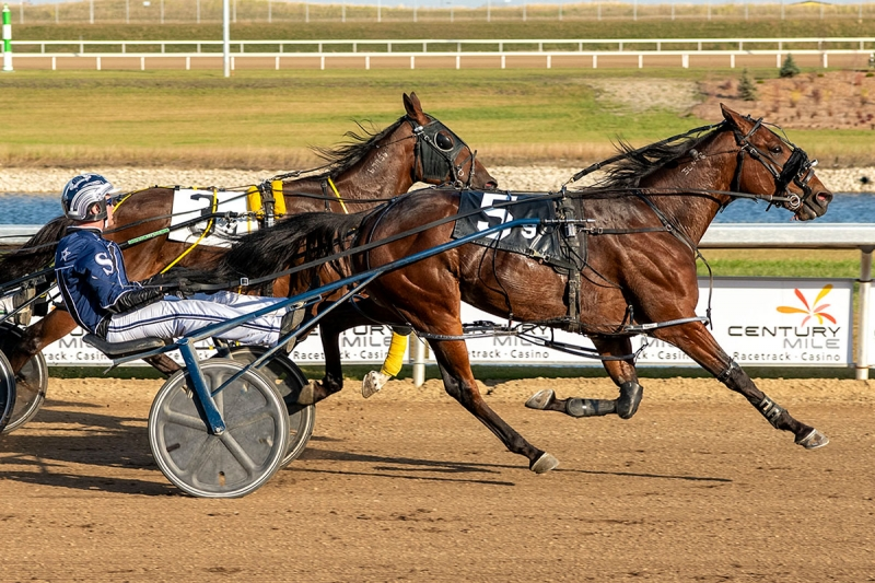 Icy Blue Scooter (Nathan Sobey) winning the $9K Century Mile Open on September 20, 2019