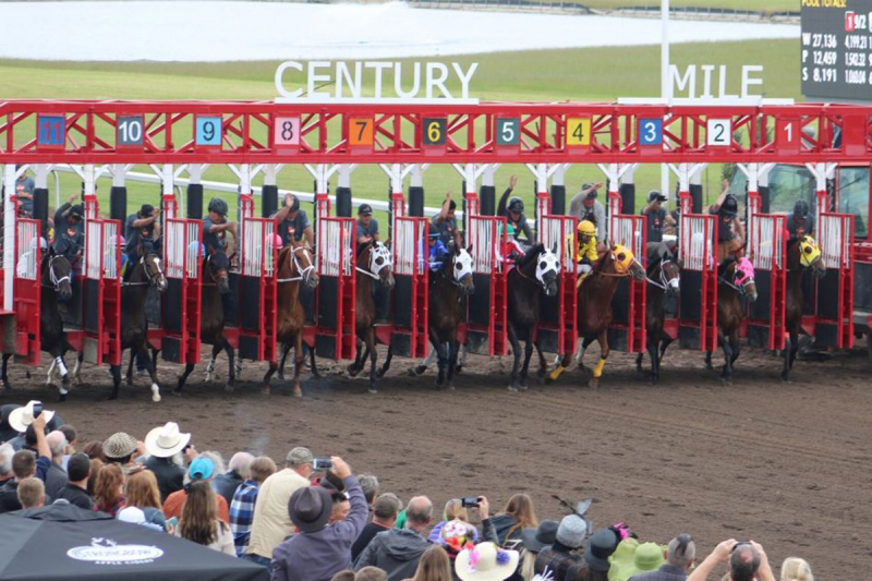 """While other sports shut down, horse racing in Alberta exploded"""