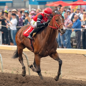 Escape Clause winning the City of Edmonton Distaff Handicap on Canadian Derby day at Northlands Park