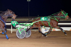 Lady Neigh Neigh, driven by Dave Kelly at Century Mile in last Sunday's feature race